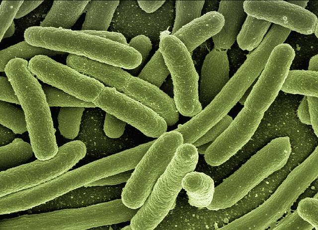 zakażenie e coli