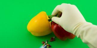 GMO to genetyczna modyfikacja żywności